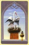 17m-storks